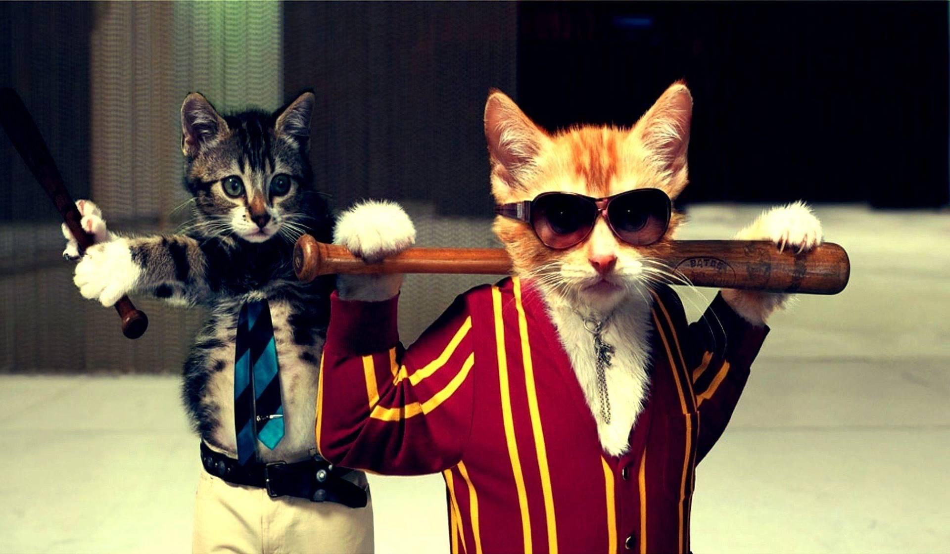 La tarea de cuidar gatos que no son tuyos