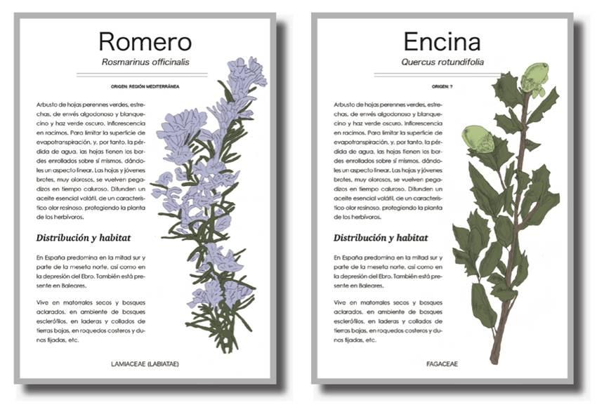Guideline fichas del Botánico-Jardín Creativo.