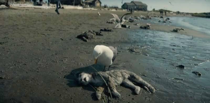 Playa con gatos muertos.